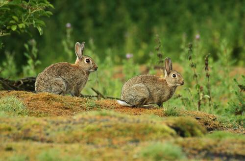 rabbits pest control